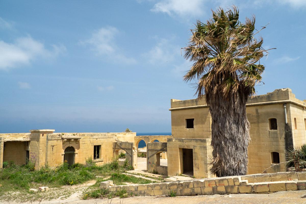 Eingangsbereich mit alter Palme vor dem Hauptgebäude