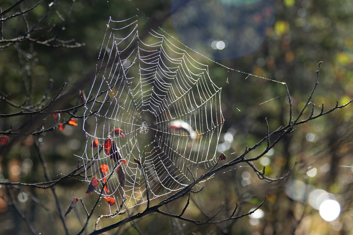 Spinnennetz am frühen Morgen